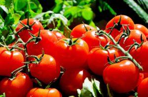 tomatenhaus angebote